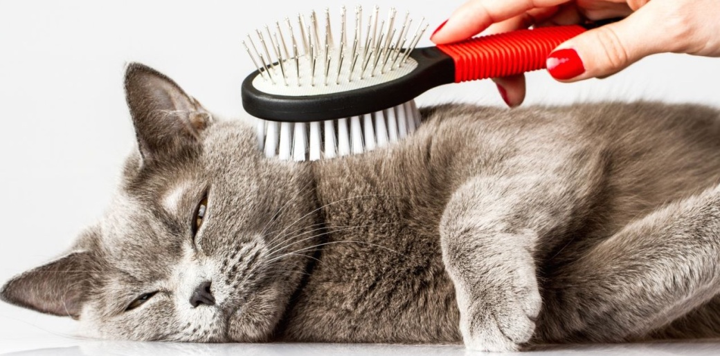 how-to-keep-on-top-of-a-cats-shedding-54d6106fe1b49.jpg