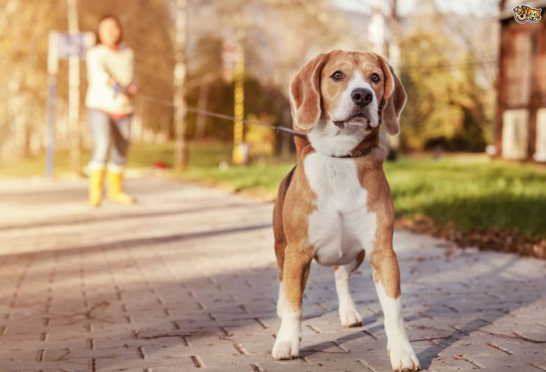 five-big-training-and-handling-mistakes-often-made-by-dog-owners-558a770cb4db3